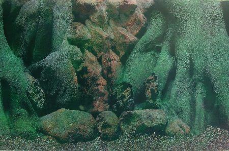 Trixie Pozadina za akvarijum, drvo 3D/slatkovodna str., 49 cmx15 m  ( 8120 )